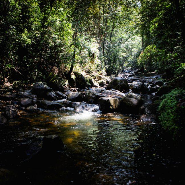 A voir Sri Lanka - Sinharaja