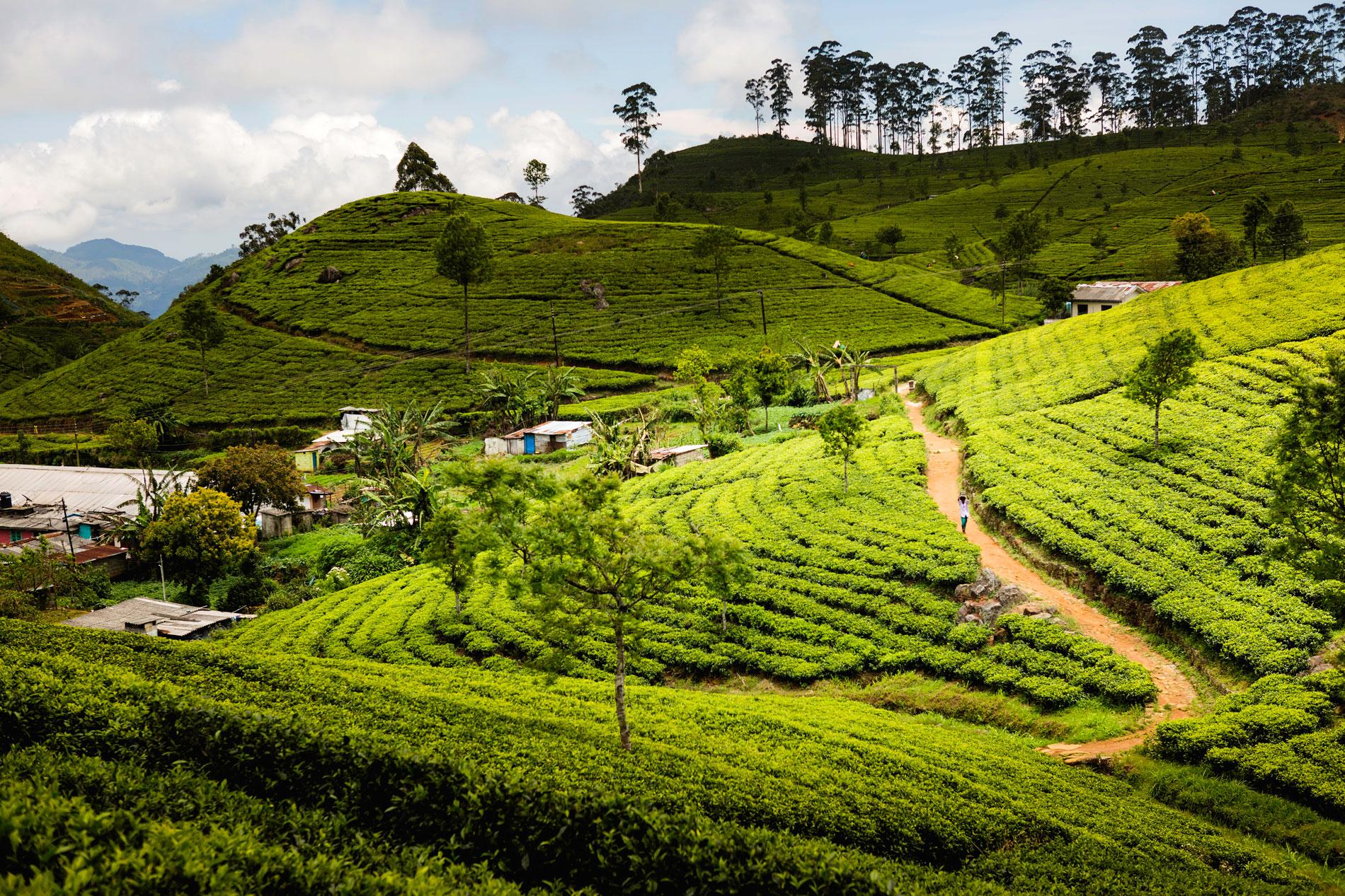 Sri Lanka - Atypique Lanka