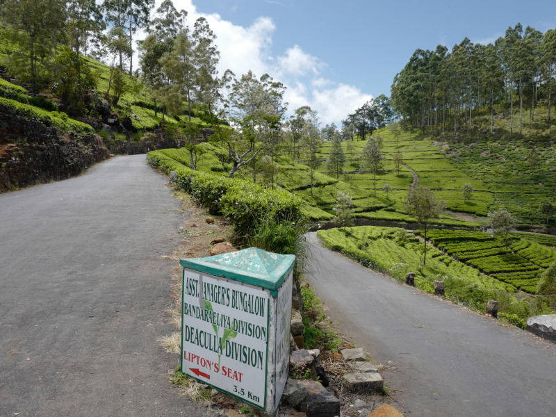 Route menant à la région de Lipton Seat au Sri Lanka
