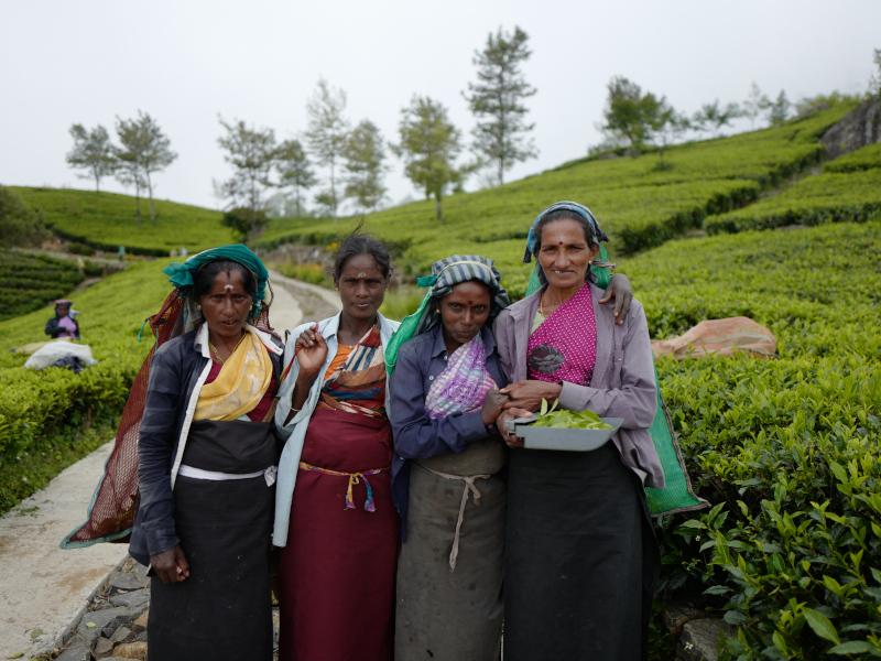 Cueilleuses de thé dans la région de Lipton Seat au Sri Lanka