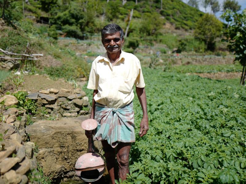 Un Sri Lankais dans une plantation de thé dans la région de Lipton Seat