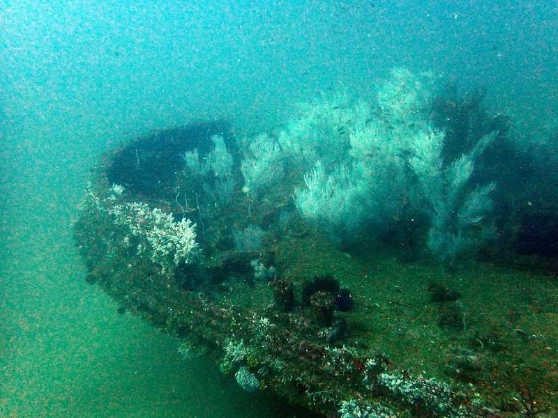Coraux sur une épave au large de Colombo au Sri Lanka
