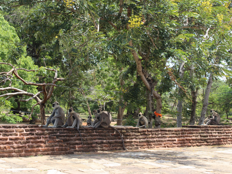 Le site d'anuradhapura au Sri Lanka