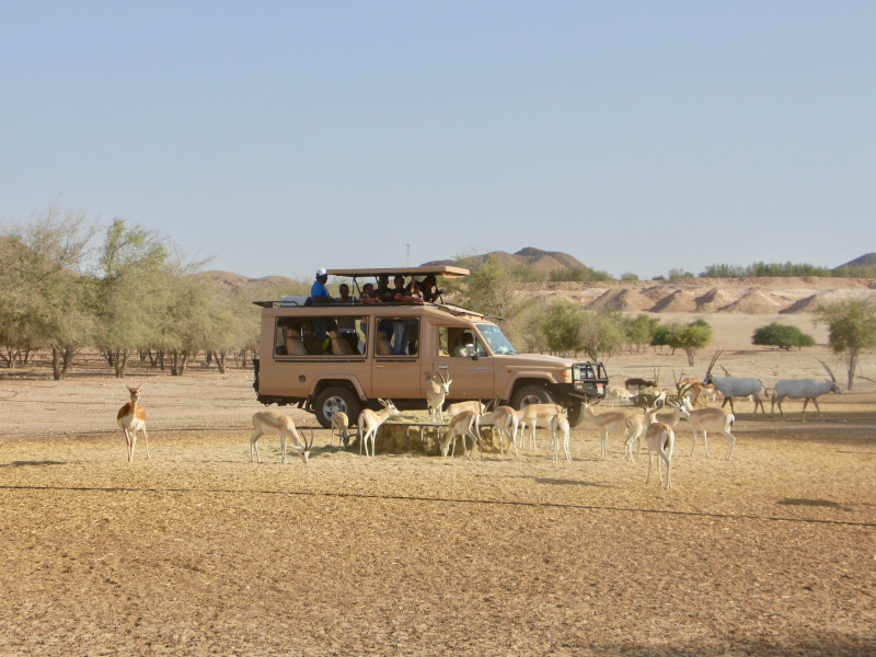 Safari en 4x4 dans la réserve de sir bani yas island